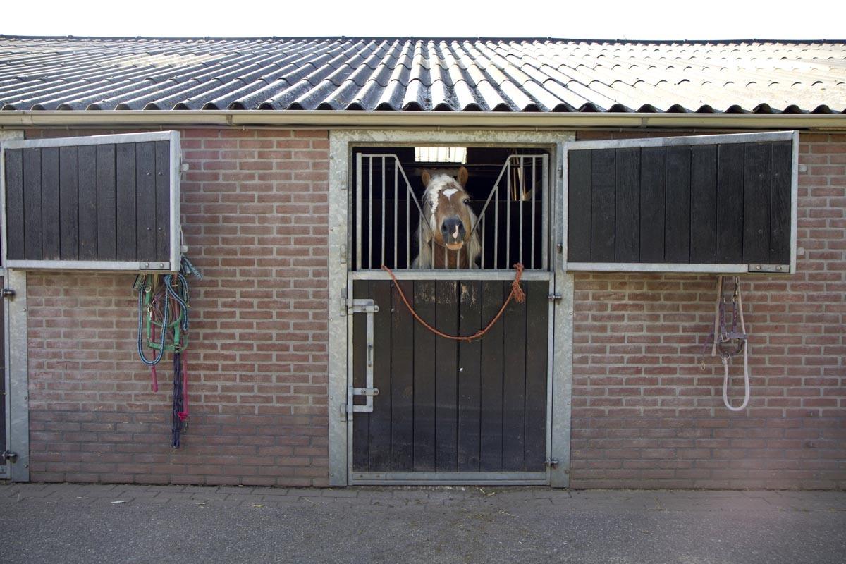 Vakantiehuisje-Veluwe-Paard-Ede-026