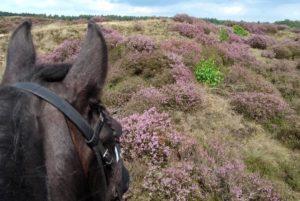 Vakantiehuisje op de Veluwe bij paardenpension. Kom buitenrijden met uw eigen paard en slaap in de comfortabele vakantiewoning. Talloze uitrijdmogelijkheden op bos en heide.